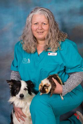 jefferson city veterinary
